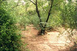 ShyamKuti-Indie